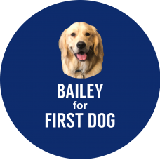 Bailey for First Dog